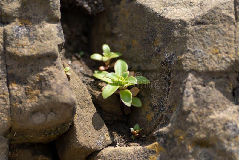 Imagen de una planta verde contra un fondo de piedras imágenes de archivo libres de regalías