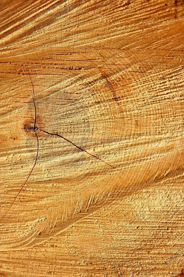 Imagen de una sección de madera que muestra la edad del árbol imagenes de archivo