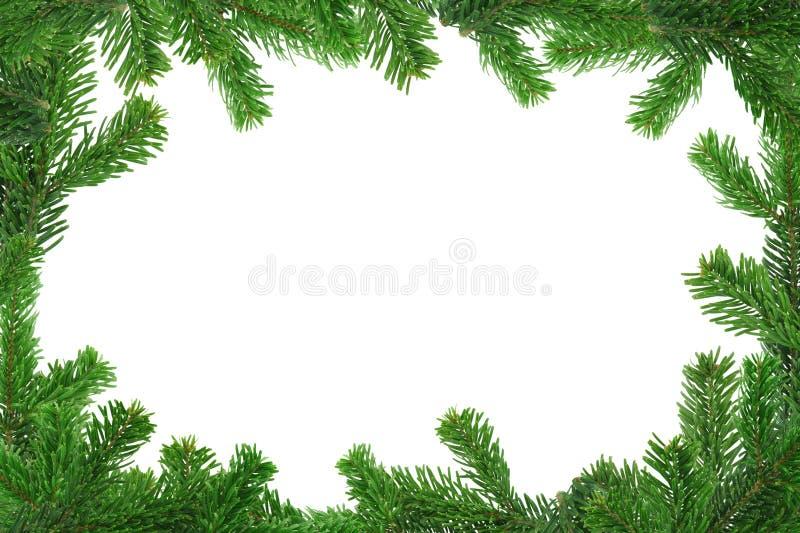 Imagen de Xxl del bastidor spruce de la ramita fotos de archivo libres de regalías