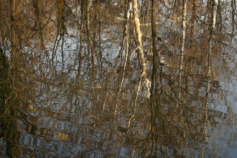 Imagen del árbol en las aguas tranquilas fotos de archivo libres de regalías