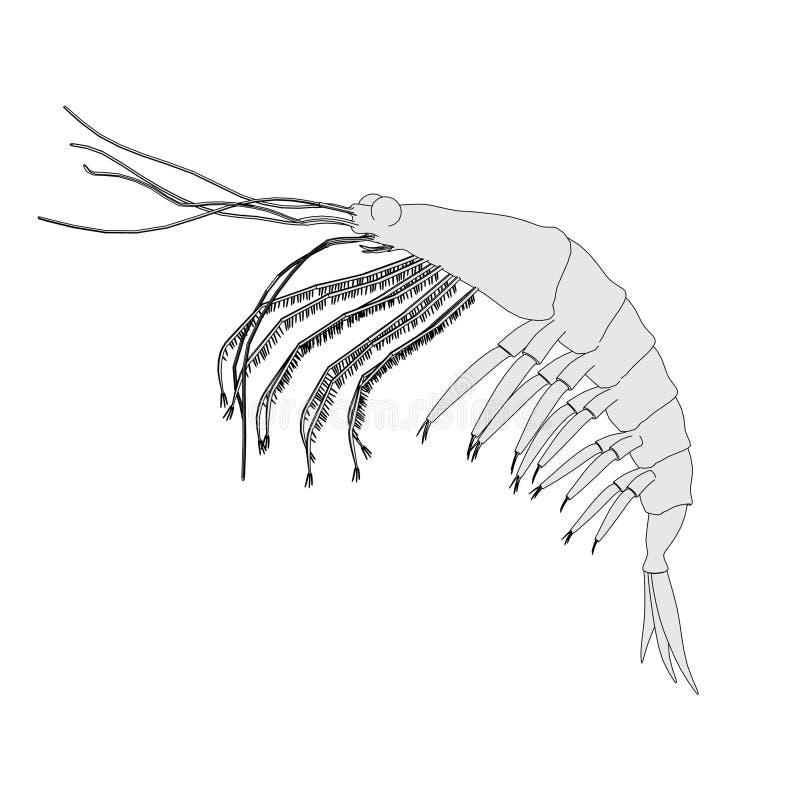 Imagen del animal crustáceo - camarón antártico stock de ilustración