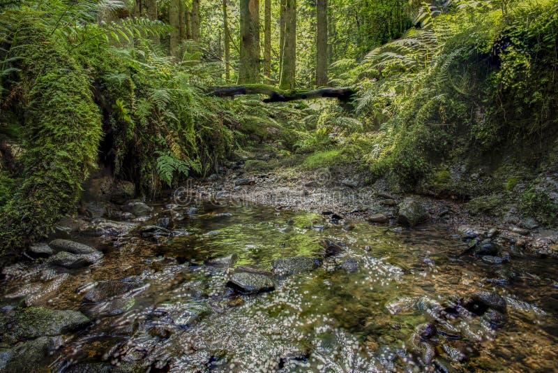 Imagen del bosque con la corriente fotografía de archivo