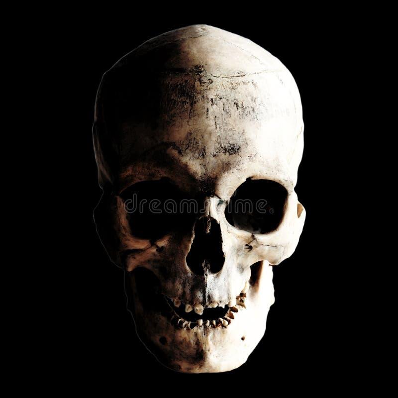 Imagen del contraste de un cráneo humano real en un fondo oscuro Aislado en negro imágenes de archivo libres de regalías