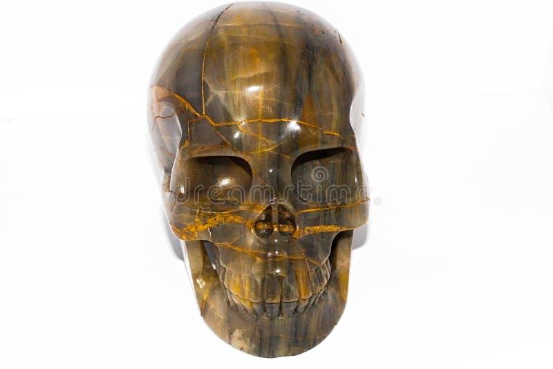 Imagen del cráneo de cristal de fósil de madera triturada fotografía de archivo libre de regalías