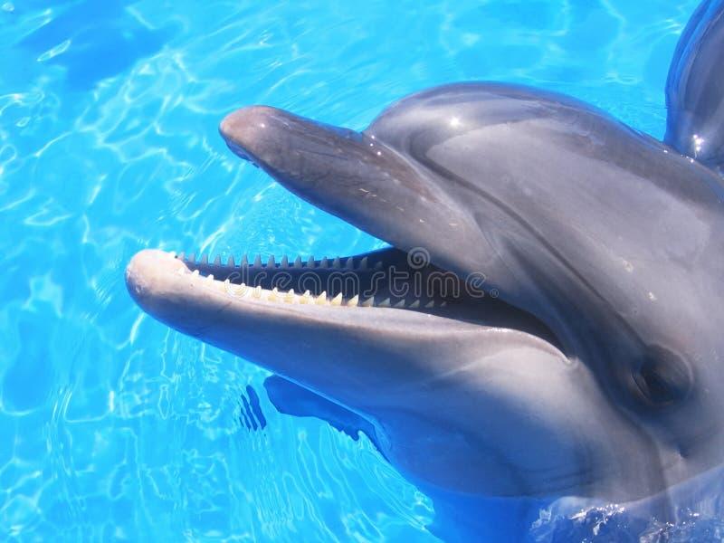 Imagen del delfín - fotos comunes de los delfínes hermosos fotos de archivo libres de regalías