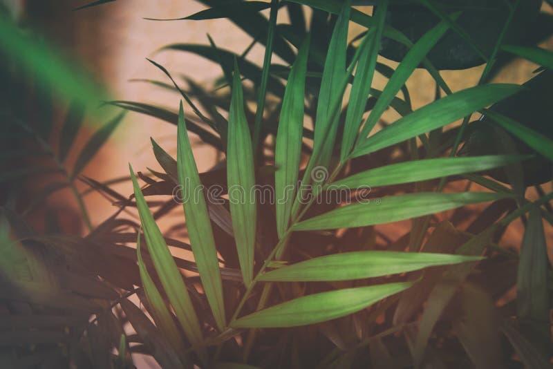 imagen del fondo floral oscuro de las hojas tropicales imagen de archivo libre de regalías