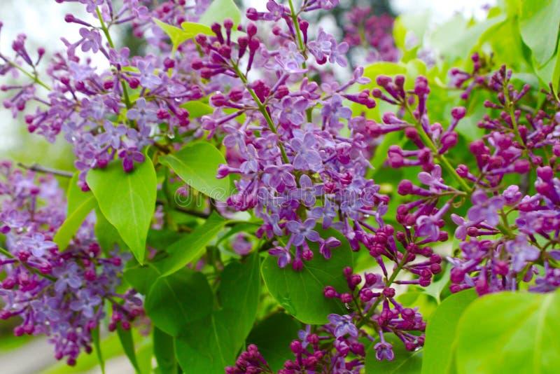 Imagen del jardín de la flor de la primavera imágenes de archivo libres de regalías