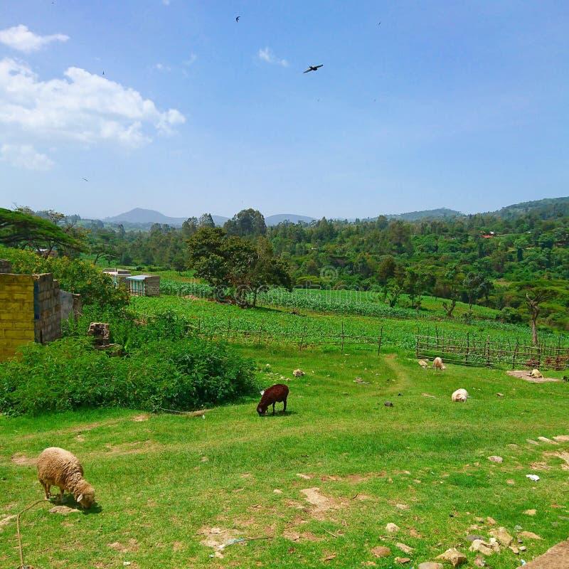 Imagen del paisaje de la vida de la granja en zonas rurales foto de archivo libre de regalías