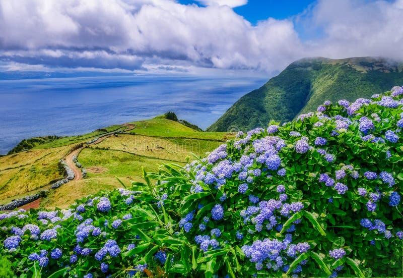 Imagen del paisaje hermoso con hortensias y una trayectoria que lleva al Atlántico en las Azores fotografía de archivo