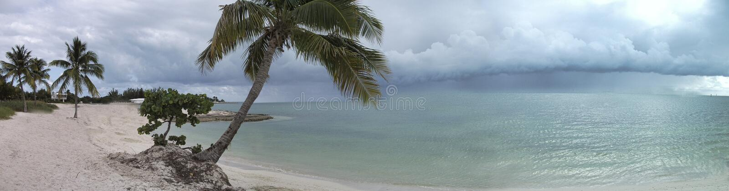 imagen del panorama de la playa y de la palma en frente fotos de archivo