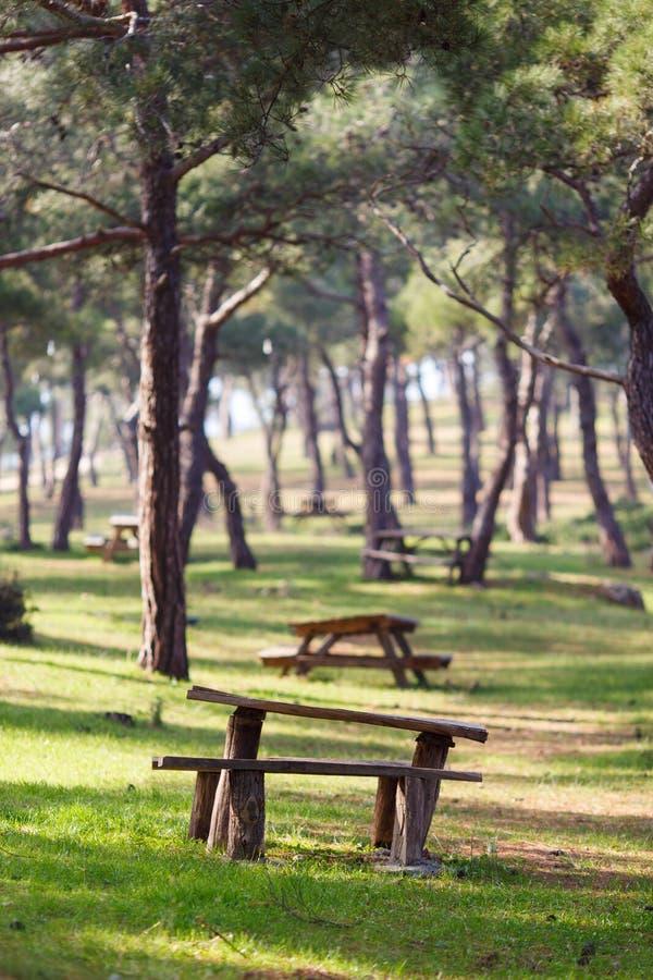 Imagen del parque con los árboles, bancos de madera, tabla fotos de archivo