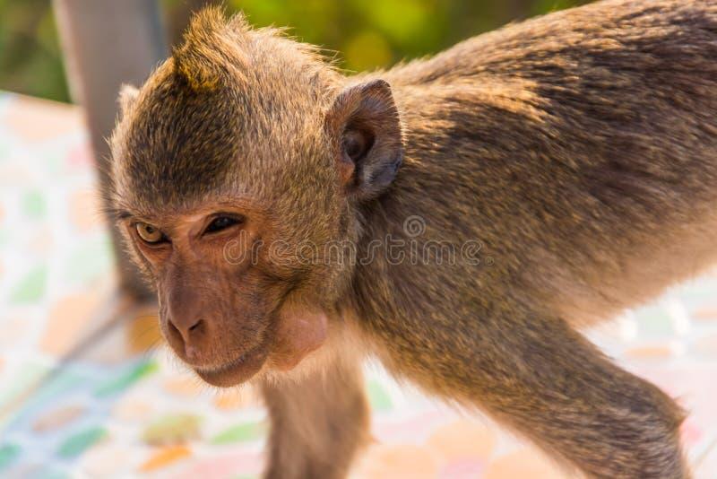 Imagen del primer de un mono fotografía de archivo libre de regalías