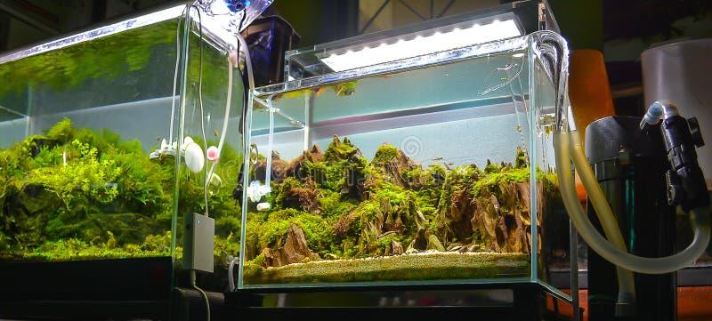 imagen del tanque de la planta de agua y de pescados de agua dulce imagen de archivo libre de regalías