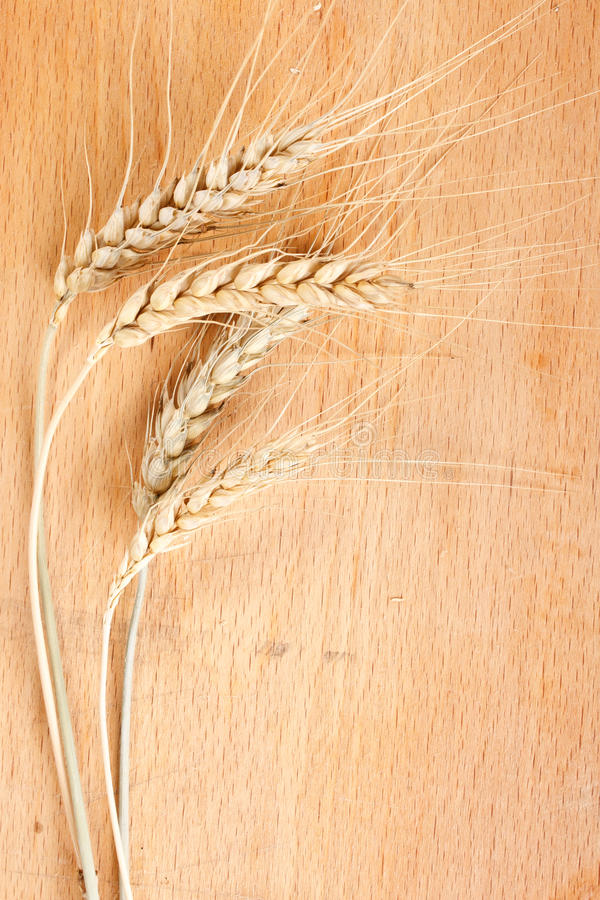 Imagen del trigo en el vector fotos de archivo