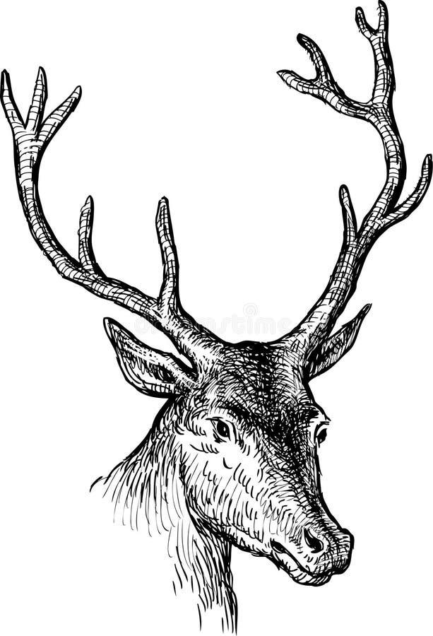 Cabeza de los ciervos ilustración del vector