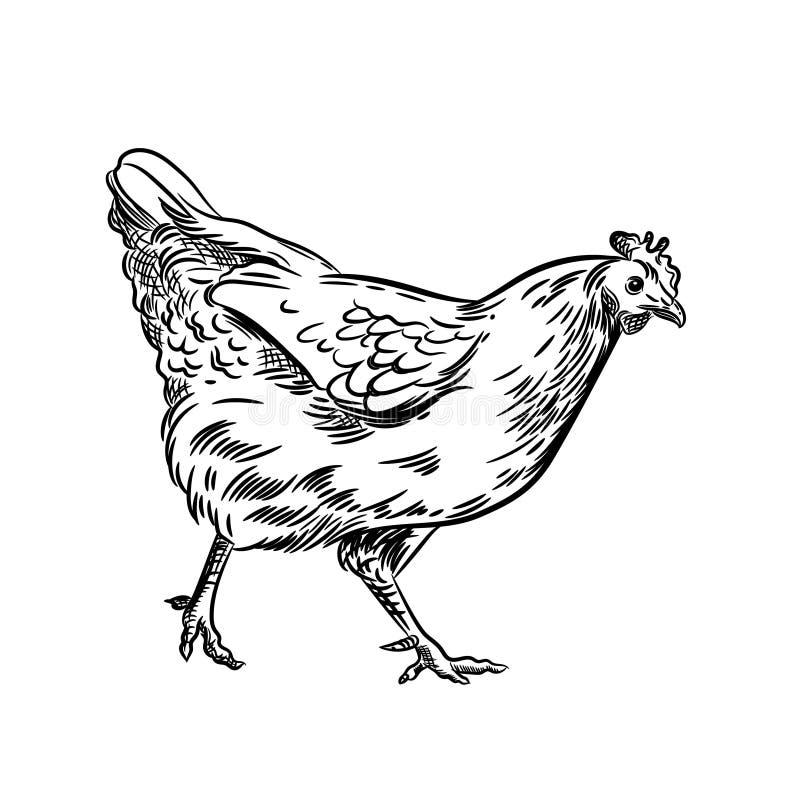 Imagen del vector de una gallina Ejemplo agrícola P?jaro dom?stico stock de ilustración