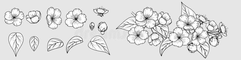 Imagen del vector de una rama a mano de la flor de cerezo fotografía de archivo