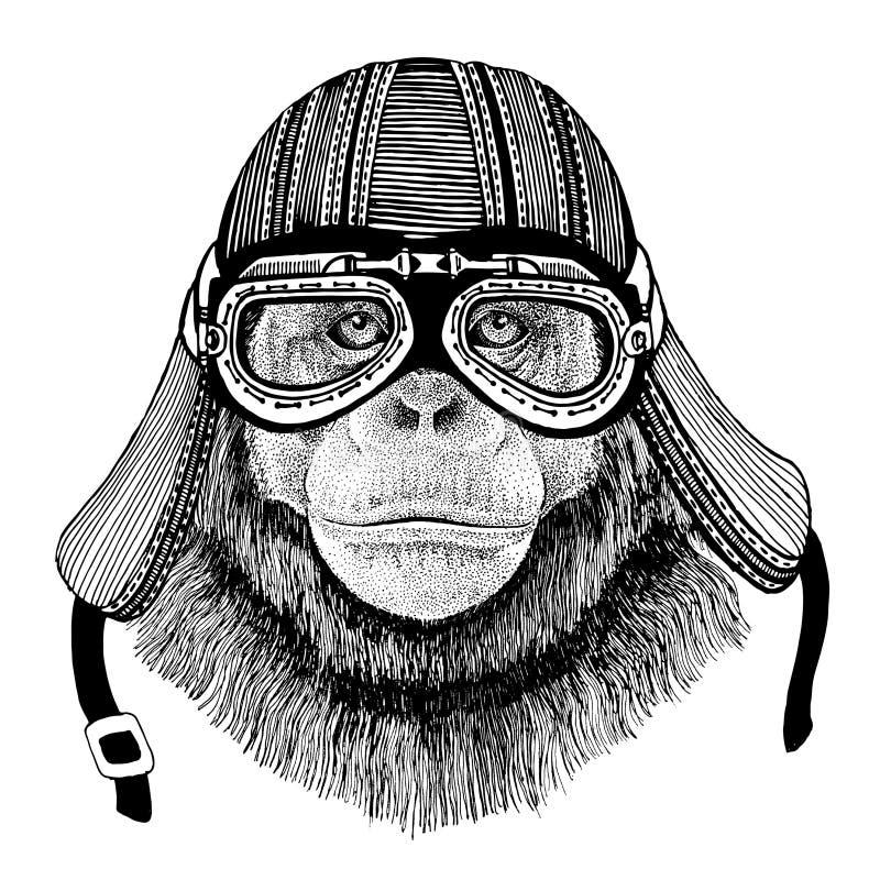 Imagen dibujada mano del mono del chimpancé del casco animal de la motocicleta que lleva para la camiseta, tatuaje, emblema, insi libre illustration