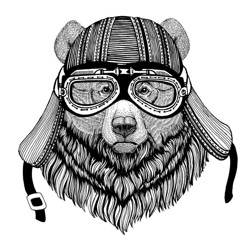Imagen dibujada mano salvaje grande del oso del oso grizzly del casco animal de la motocicleta que lleva para la camiseta, tatuaj foto de archivo libre de regalías