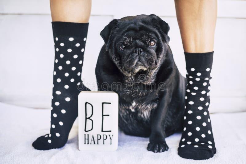 Imagen divertida para ser concepto feliz piernas caucásicas de la mujer joven con los calcetines agradables y locos y el barro am imagen de archivo