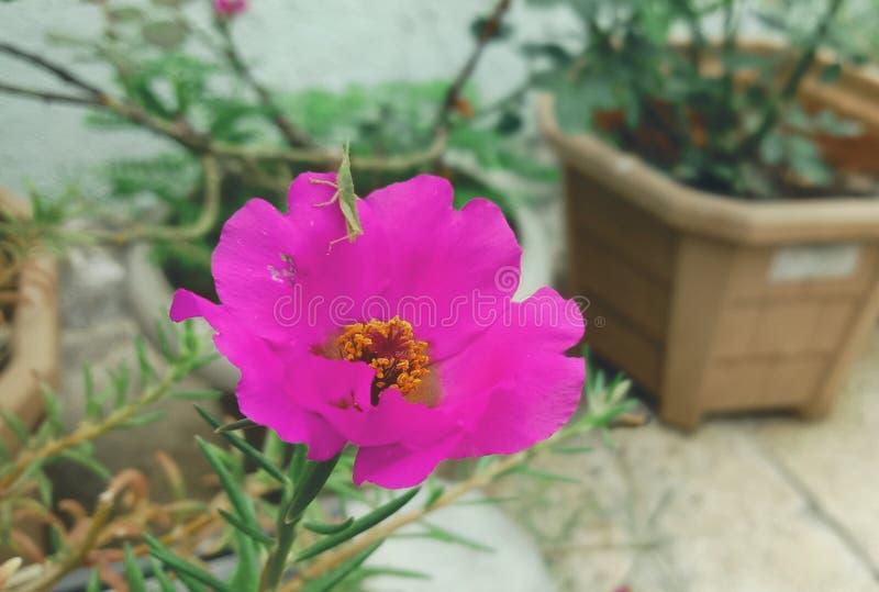 Imagen enfocada de la flor imágenes de archivo libres de regalías