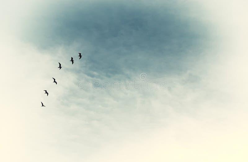 imagen enigmática surrealista de los pájaros de vuelo concepto del minimalismo y del sueño foto de archivo libre de regalías