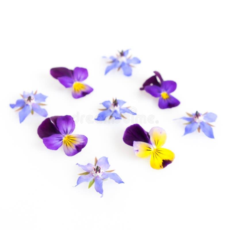 Imagen filtrada alta llave de flores comestibles foto de archivo libre de regalías
