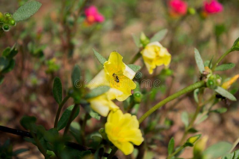 Imagen hermosa de la flor, imagen de Rose Flower, imagen de la flor de HD foto de archivo libre de regalías