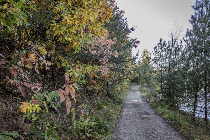 Imagen hermosa de una trayectoria en el bosque al lado de un lago fotografía de archivo libre de regalías