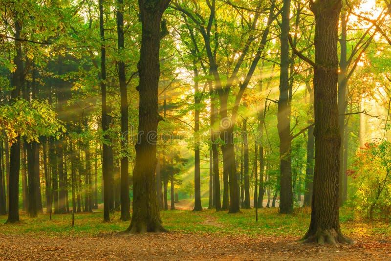 Imagen hermosa del bosque en el amanecer imagenes de archivo