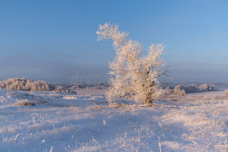 Imagen hermosa del invierno landscape árbol nevado solo en el campo fotos de archivo