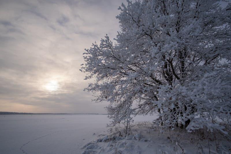 Imagen hermosa del invierno landscape árbol nevado solo en el campo fotos de archivo libres de regalías