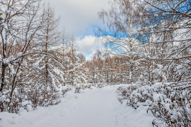 Imagen hermosa del invierno landscape El parque de la ciudad se cubre en nieve foto de archivo libre de regalías