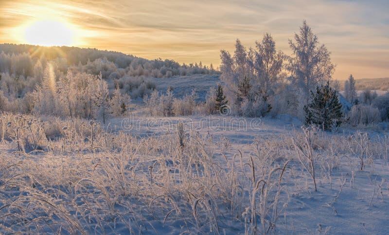 Imagen hermosa del invierno landscape salida del sol sobre árboles nevados imagenes de archivo
