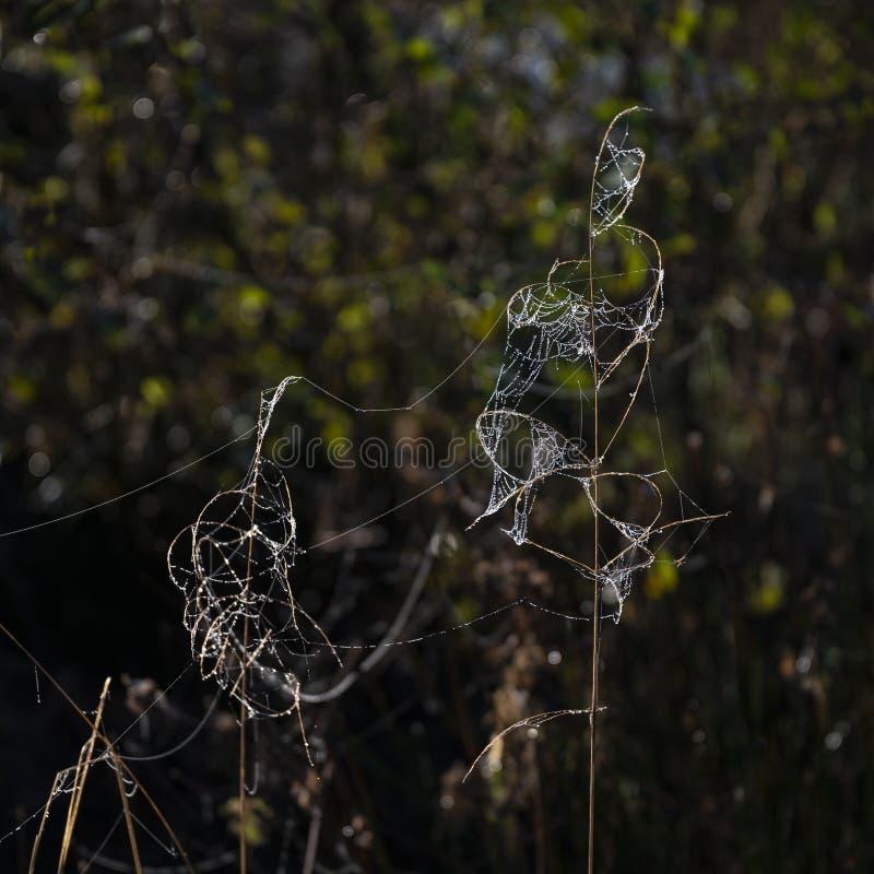 Imagen hermosa del paisaje del detalle de la web de araña en luz escarchada de la mañana del rocío frío imagenes de archivo