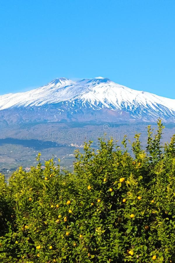 Imagen hermosa del volcán del monte Etna capturada con los árboles de limón con los limones amarillos maduros Cielo azul, día sol imagenes de archivo