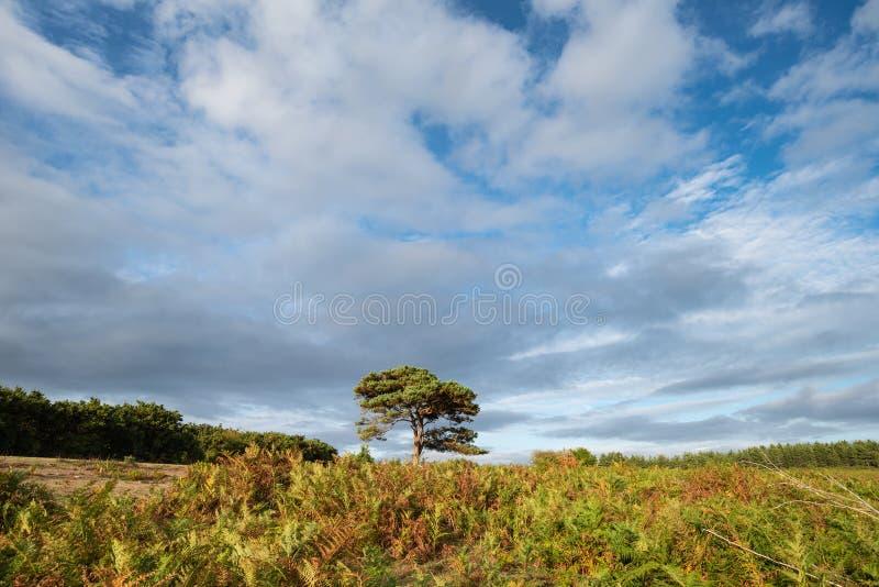 Imagen imponente del paisaje de la puesta del sol del verano de la opinión de Bratley en las nuevas FO imagen de archivo