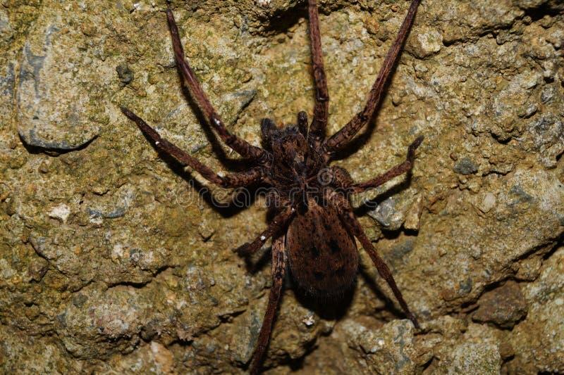 Imagen impresionante y muy detallada de la araña imagen de archivo libre de regalías