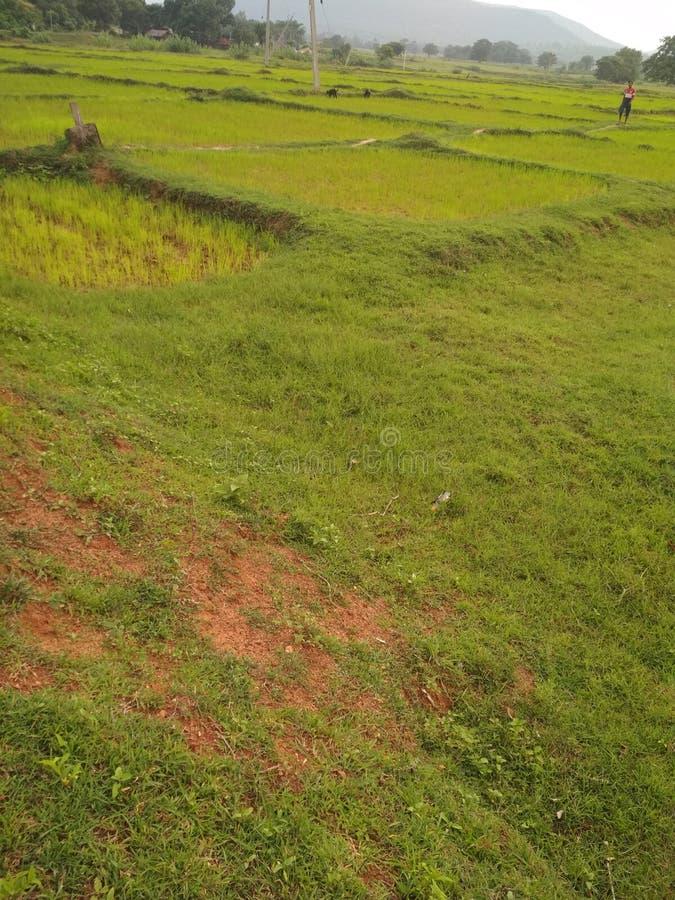 Imagen india del área cultivada del pueblo foto de archivo