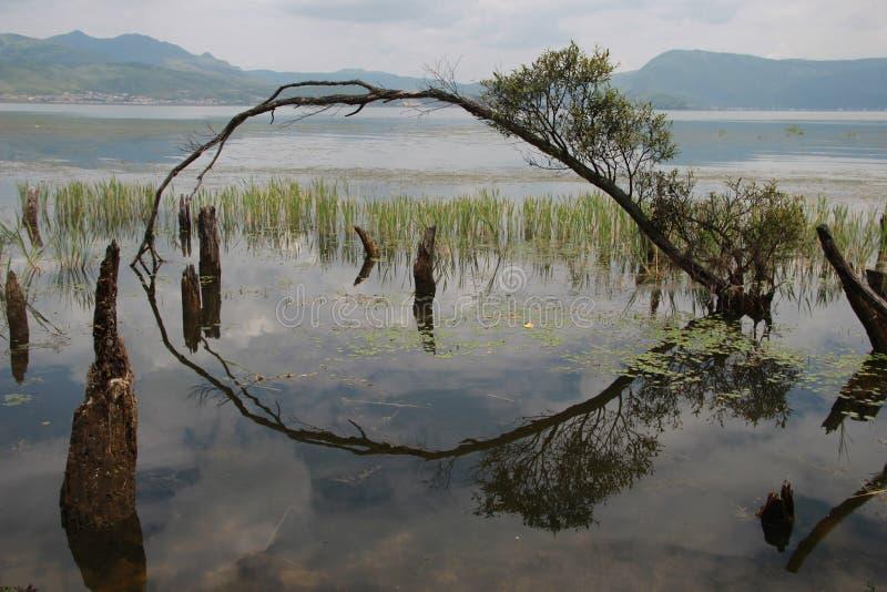 Imagen invertida del árbol foto de archivo