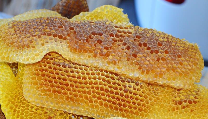 imagen macra de la miel de los apis del rodopica natural del melifera foto de archivo libre de regalías