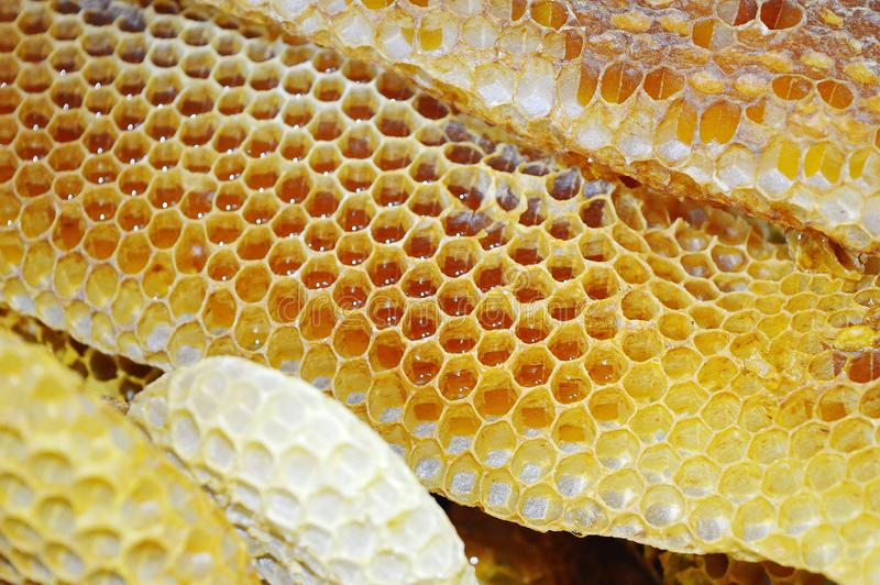 imagen macra de la miel de los apis del rodopica natural del melifera fotos de archivo libres de regalías