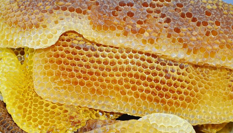 imagen macra de la miel de los apis del rodopica natural del melifera imagenes de archivo