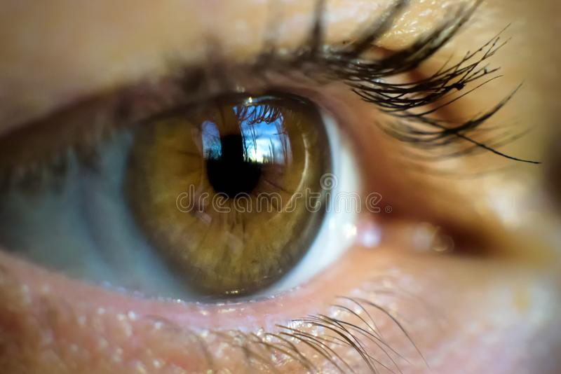 Imagen macra del ojo humano con la lente de contacto fotos de archivo