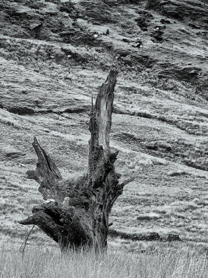 imagen monocrom?tica de un viejo ni?o muerto quebrado del tronco de ?rbol del paisaje ?spero rugoso de la ladera del penino con l fotos de archivo libres de regalías