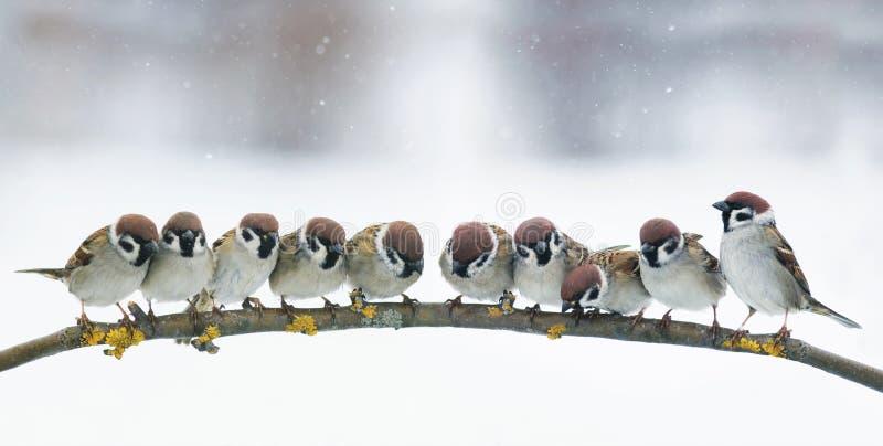 Imagen panorámica con muchos pequeños pájaros divertidos que se sientan en el PA foto de archivo
