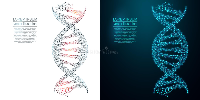 Imagen poligonal del extracto de la DNA Wireframe polivinílico bajo libre illustration