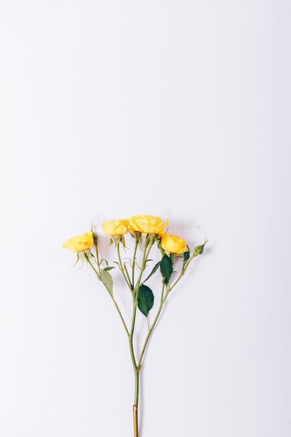 Imagen vertical de pequeñas rosas amarillas fotos de archivo libres de regalías