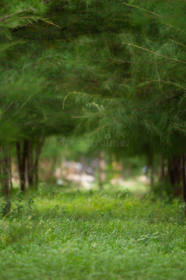 Imagen vertical del fondo del árbol de pino del bosque La profundidad del campo encendido apoya de un detalle de la alfombra pers fotografía de archivo libre de regalías