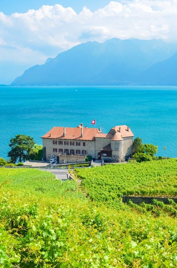 Imagen vertical del viñedo verde en cuestas por el lago en la región del vino de Lavaux, Suiza geneva Herencia de la UNESCO Suiza imagen de archivo libre de regalías
